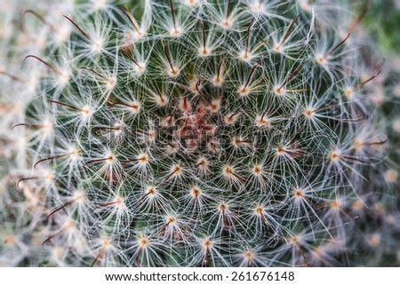 green background of thorns a cactus closeup - stock photo