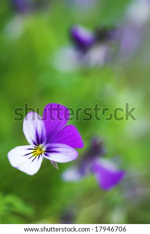 Green background with blossom heartsease
