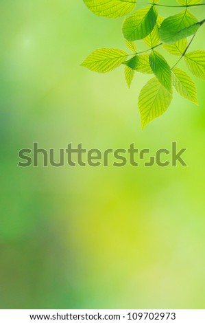Green background with leaves of raspberry-bush