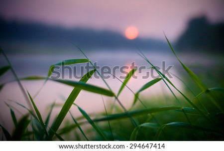 green background with sun and grass with dew drops close to the river on a background sunrise with shallow depth of field - stock photo