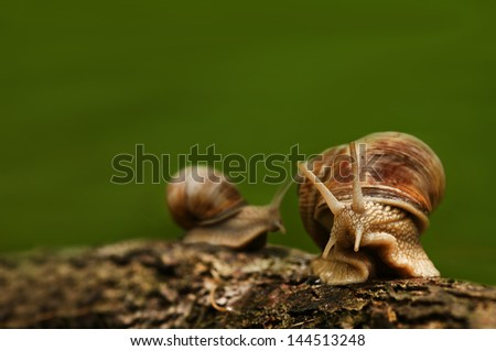 Green background with two snails on wood - stock photo