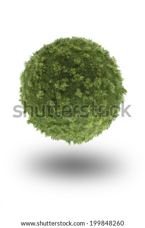 Green ball made out of grass isolated on a white background.(Moss ball) - stock photo