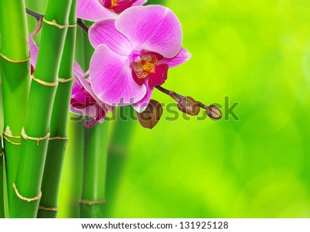 green bamboo and orchid isolated on a green background - stock photo