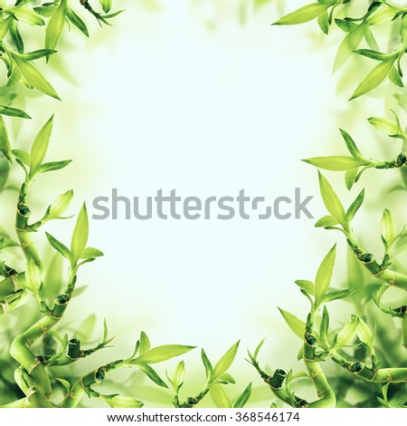 Green Bamboo Background. Spa and Healthy - stock photo