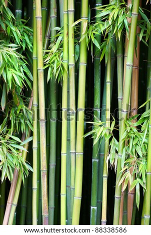 Green bamboo can be used for natural background - stock photo
