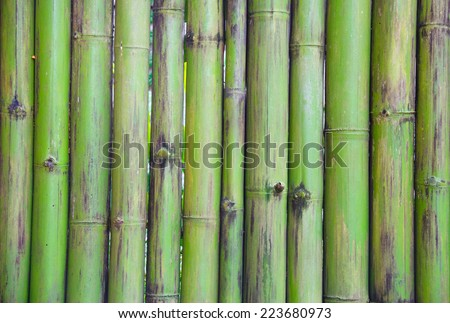 green bamboo fence pattern