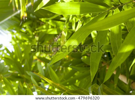 Green bamboo forest with outdoor day summer day light