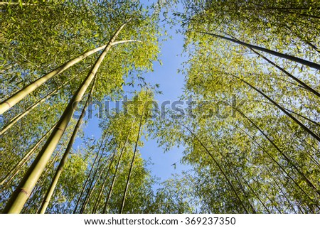 Green bamboo forest with sun star and blue sky at  Angkhang Royal Agricultural Station, Chiangmai, Thailand. - stock photo