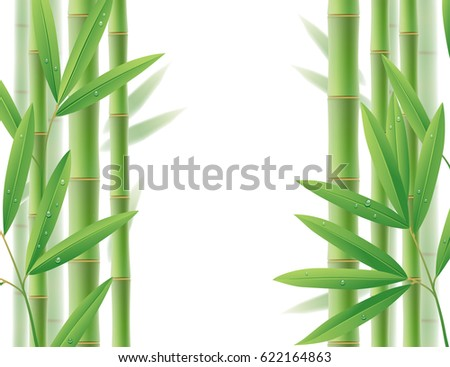 Green bamboo frame with stems and leaves on white