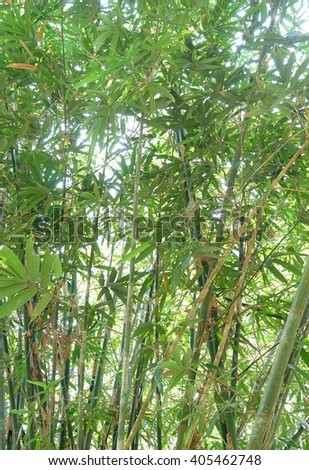 Green bamboo in the nature - stock photo
