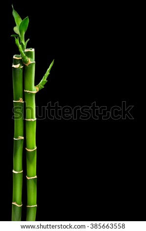 green bamboo isolated on a black background - stock photo