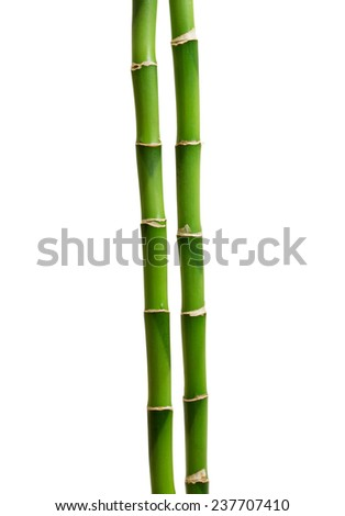 green bamboo isolated on white - stock photo