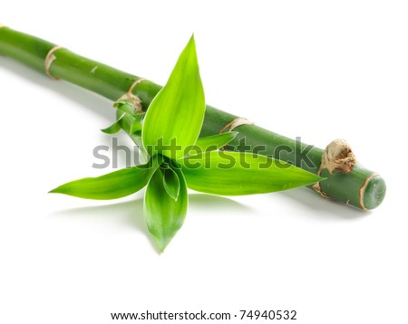green bamboo isolated on white