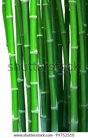 green bamboo isolated white - stock photo