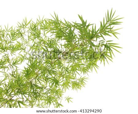 Green Bamboo leaf background - stock photo