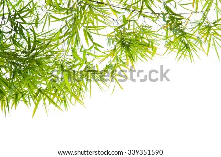 Green Bamboo leaf background ,border design - stock photo