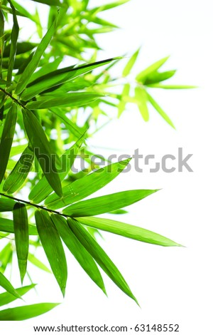 green bamboo leaves - stock photo