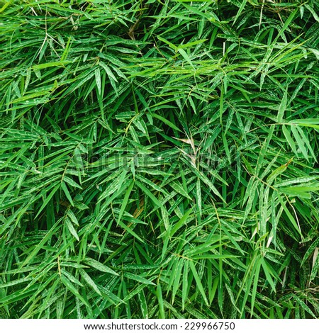 Green bamboo leaves close-up - stock photo