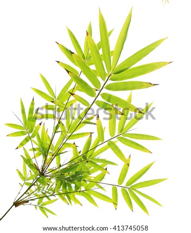 Green bamboo leaves isolated on white background - stock photo