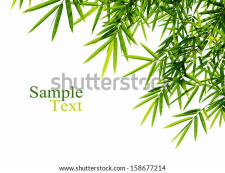 Green bamboo leaves on white background. - stock photo