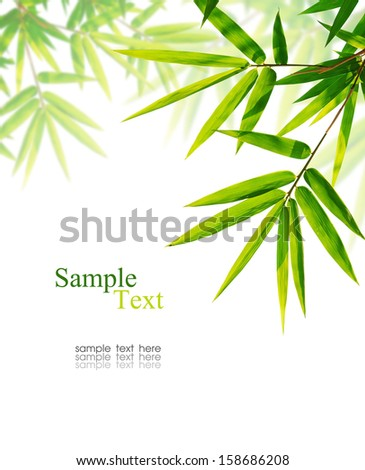Green bamboo leaves on white background with sample text. - stock photo