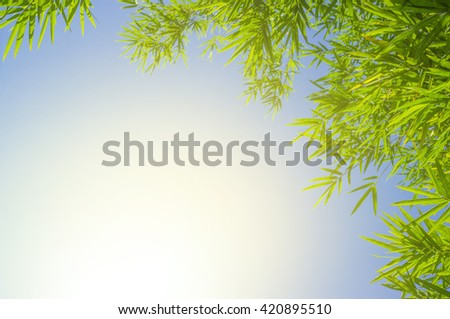 Green bamboo leaves or background .Green Energy. - stock photo