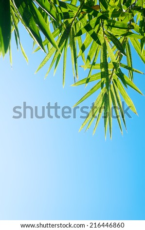 Green bamboo leaves shot against a bright blue morning sky