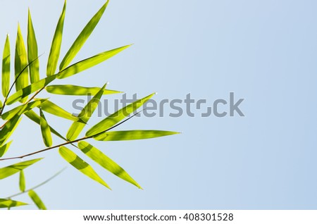 Green bamboo leaves with morning raindrops,  blue sky background, ant eye view. - stock photo