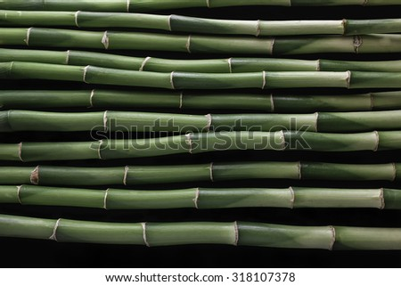 green bamboo on the black background