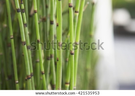 Green bamboo plant at spa. Selective focus image