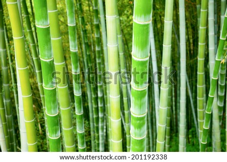 Green bamboo stalks natural background