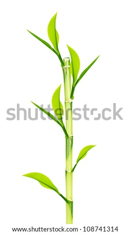 Green Bamboo stems isolated on white background - stock photo