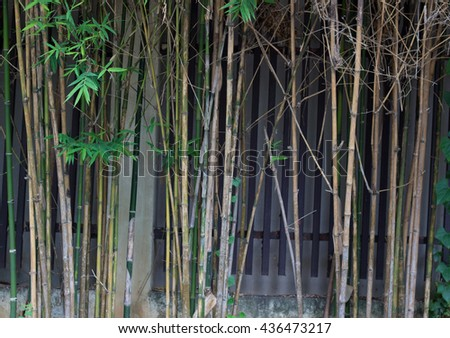 Green bamboo tree background texture