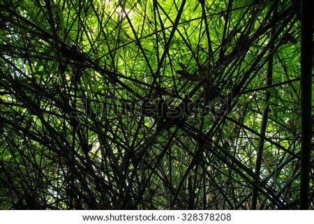 Green Bamboo tree Backlit Silhouette abstract background - stock photo