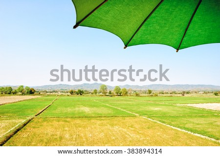 Green bamboo umbrella in rice fields - stock photo