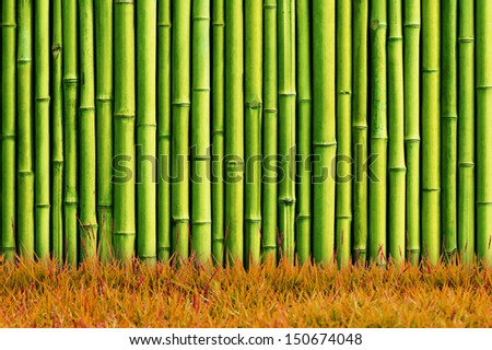 green bamboo wall and green grass - stock photo