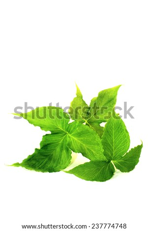 green Ban Xia on a light background - stock photo