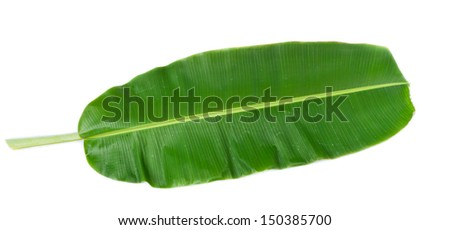 green banana leaf isolated on white background - stock photo