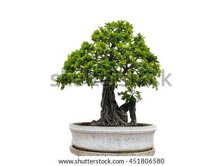 green banyan tree with a white background