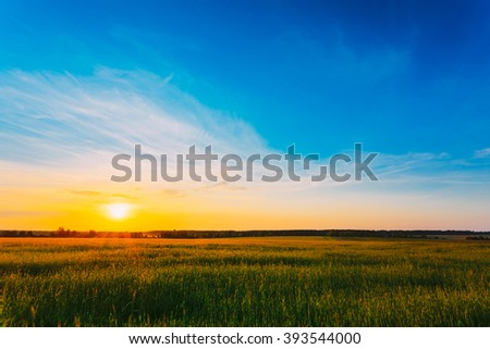 Green Barley Field In Early Spring. Agricultural Background.