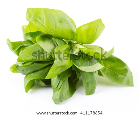 green basil isolated on white. - stock photo