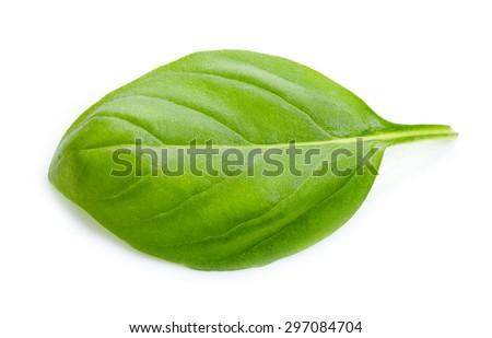green basil leaf isolated on white background - stock photo