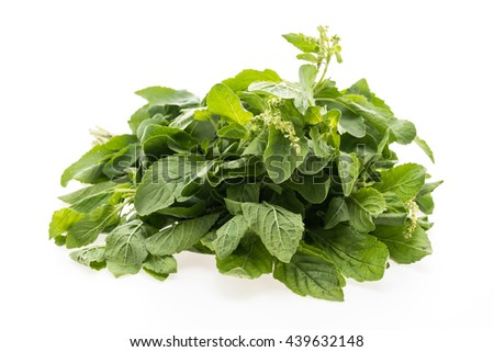 Green basil leaf isolated on white background
