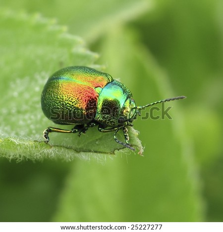 Green beetle - stock photo