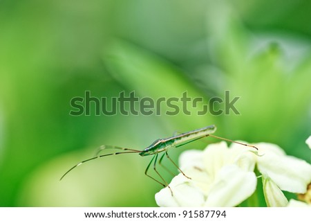 Green Beetle in the jungle - stock photo