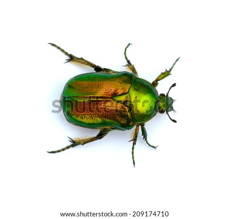 Green beetle isolated on white background  - stock photo