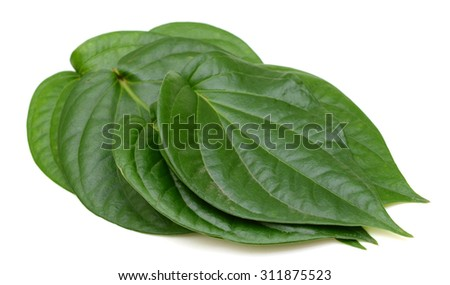 Green betel leaf isolated on the white background. This has clipping path