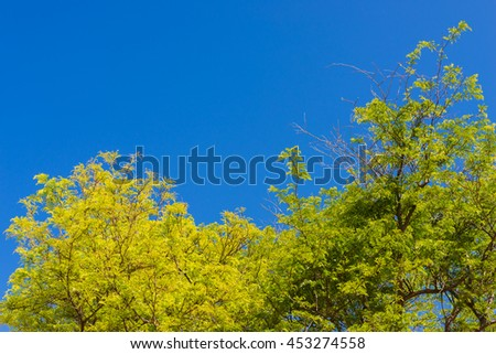 green birch leaves shining in the sun on blue sky background - stock photo