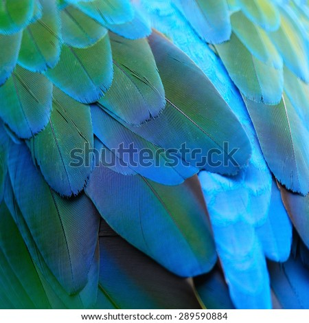 Green bird plumage, Harlequin Macaw feathers, nature texture background - stock photo