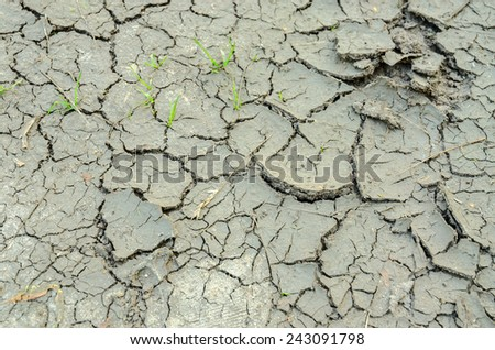 Green blades of grass on chapped soil in drought - stock photo